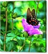 Swallowtail In Flower Canvas Print