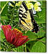 Swallowtail On A Zennia Canvas Print