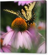Swallowtail On Coneflower Canvas Print