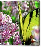 Swallowtail On Korean Lilac Florals Canvas Print