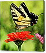 Swallowtail Resting Canvas Print