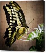 Swallowtail Canvas Print