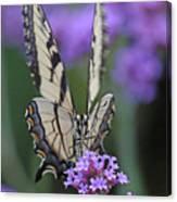 Swallowtail Staredown Canvas Print
