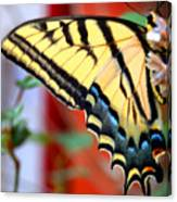 Swallowtail Wing Canvas Print