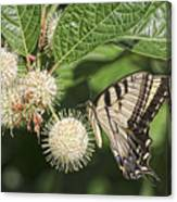 Swallowtail With Flowers Canvas Print