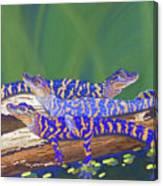 Swamp Babies Canvas Print
