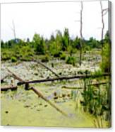 Swamp Habitat Canvas Print