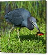 Swamp Hunter Canvas Print