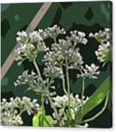 Swamp Milkweed Abstract Canvas Print