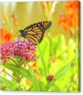 Swamp Milkweed And Monarch Canvas Print