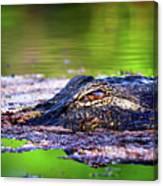 Swamp Patrol Canvas Print