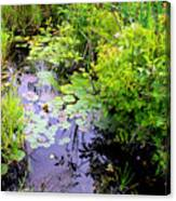 Swamp Plants Canvas Print