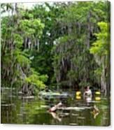 Swamp Stroll Canvas Print
