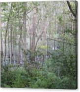 Photo Of Swamp Canvas Print