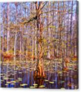 Swamp Tree Canvas Print