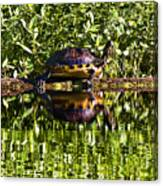 Swamp Turtle Sunning On A Log Canvas Print