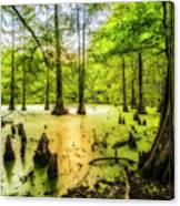 Swampland Dreams Canvas Print