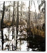 Swamps Of Louisiana 5 Canvas Print