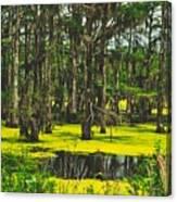 Swampy Beauty Canvas Print