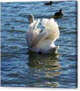 Swan 001 Canvas Print