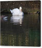 Swan And Geese Canvas Print