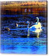 When It Seems Like The Swans Are Ruling The Sea  Canvas Print