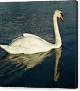 Swan Blasting Away Canvas Print