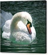 Swan Bow Canvas Print