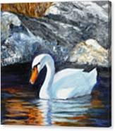 Swan By Rocks Canvas Print