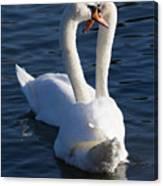 Swan Courtship  Canvas Print