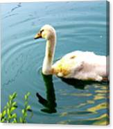 Swan Cygnet By Earl's Photography Canvas Print