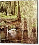 Swan Dreams Canvas Print