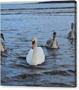 Swan Family At Sea Canvas Print