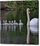 Swan Family Portrait Canvas Print