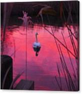 Swan In A Sunset Canvas Print