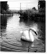Swan In Black And White Canvas Print
