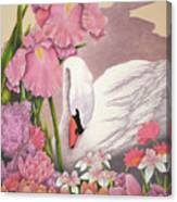 Swan In Pink Canvas Print