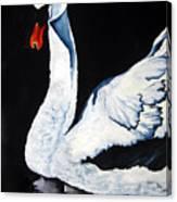 Swan In Shadows Canvas Print
