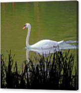 Swan In The Pond Canvas Print