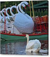 Swan Meeting Up With Some Friends Canvas Print