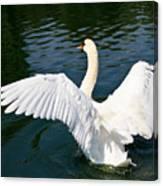 Swan Moment Canvas Print