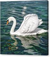 Swan On Lake Geneva Switzerland  Canvas Print