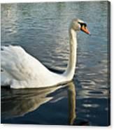 Swan On The Run Canvas Print