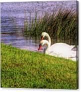 Swan Pair Warm Color Canvas Print