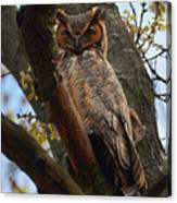 Swan Point Great Horned Owl Canvas Print