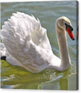 Swan Swimming By Canvas Print