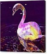 Swan Water Bird Water River  Canvas Print