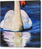 Swan Wildlife Art Canvas Print