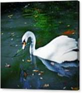 Swan With Twig Canvas Print