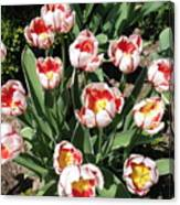 Swanhurst Tulips Canvas Print